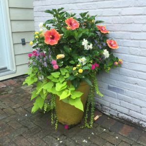 Color Flower Pot