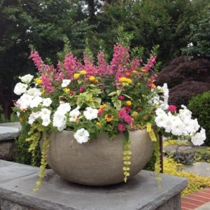 Summer Flowers Bold